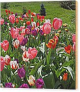 Tulips Garden Art Prints Colorful Spring Floral Wood Print