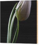 Tulips IIi Wood Print