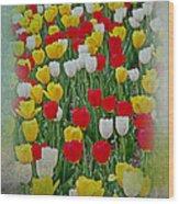 Tulips In A Field Wood Print
