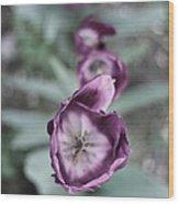 Tulips In A Garden Wood Print