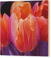 Tulips In Orange And Purple Wood Print