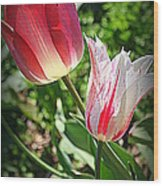 Tulips In Red And White Wood Print
