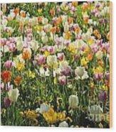 Tulips In Spring Wood Print