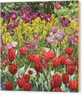 Tulips In St James's Park, London Wood Print