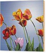 Tulips In Sun Light Wood Print