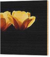 Tulips In The Dark Wood Print