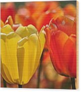 Tulips In The Midst Wood Print