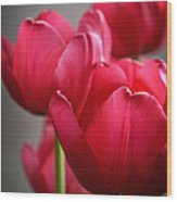 Tulips In The  Morning Light Wood Print