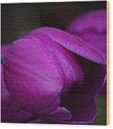 Tulips In The Rain Wood Print