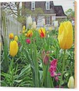Tulips In Williamsburg Wood Print