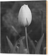 Tulips - Infrared 01 Wood Print