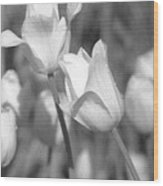 Tulips - Infrared 14 Wood Print