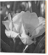 Tulips - Infrared 19 Wood Print