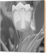 Tulips - Infrared 30 Wood Print