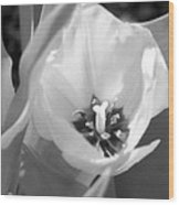 Tulips - Infrared 31 Wood Print