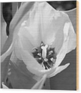 Tulips - Infrared 32 Wood Print