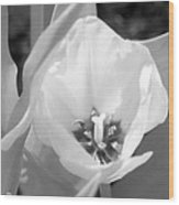 Tulips - Infrared 33 Wood Print