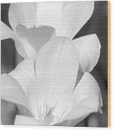 Tulips - Infrared 37 Wood Print