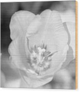 Tulips - Infrared 45 Wood Print
