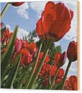 Tulips Leaning Tall Wood Print