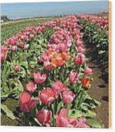 Tulips Mt Hood Wood Print