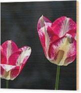 Tulips Of A Kind Wood Print