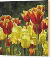 Tulips Of Germany Wood Print