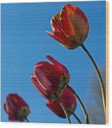 Tulips On Blue Wood Print