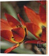Tulips On Fire Wood Print