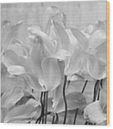 Tulips Oxford Wood Print