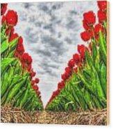 Tulips Part IIi Wood Print