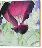 Tulips - Perfect Love - Photopower 2043 Wood Print