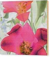 Tulips - Perfect Love - Photopower 2045 Wood Print