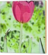 Tulips - Perfect Love - Photopower 2070 Wood Print
