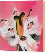 Tulips - Perfect Love - Photopower 2075 Wood Print