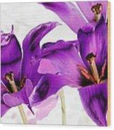 Tulips - Perfect Love - Photopower 2081 Wood Print