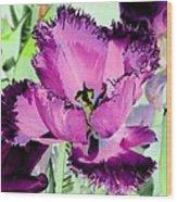 Tulips - Perfect Love - Photopower 2093 Wood Print