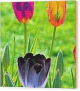 Tulips - Perfect Love - Photopower 2168 Wood Print