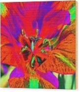Tulips - Perfect Love - Photopower 2179 Wood Print