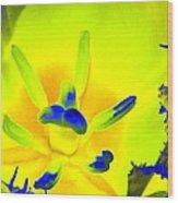 Tulips - Perfect Love - Photopower 2191 Wood Print