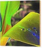 Tulips - Perfect Love - Photopower 2196 Wood Print