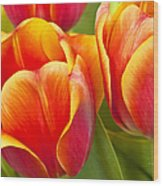 Tulips Red And Yellow Wood Print