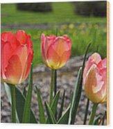 Tulips Red Pink Tulip Flowers Art Prints Wood Print