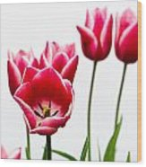 Tulips Say Hello Wood Print
