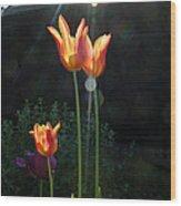Tulips Wood Print by Stephen Norris