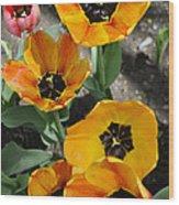 Tulips Tp Wood Print