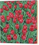 Tulips Tulips And Tulips Wood Print