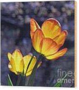 Tulips With Purple Bokeh Wood Print