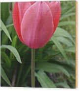 Tuliptime Wood Print