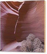 Tumbleweed In The Canyon Wood Print